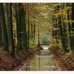 autumn-in-holland